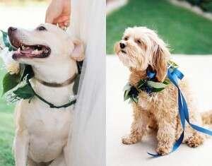 Estes 23 cães fofos em casamentos vão fazer você acreditar no amor
