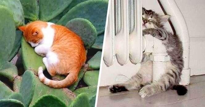 Gatos que caíram no sono em locais improváveis