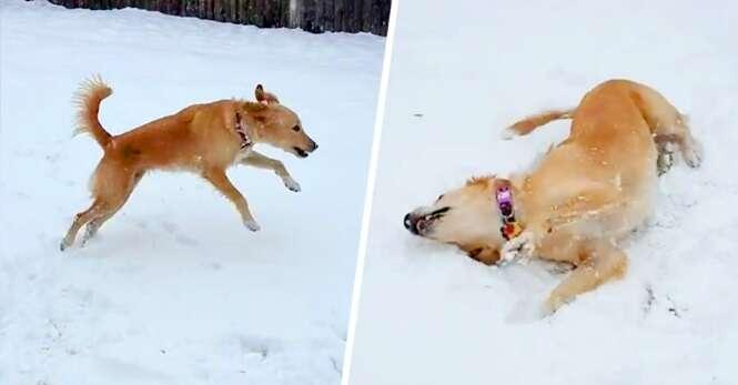 Cachorro vê neve pela primeira vez e sua reação não tem preço