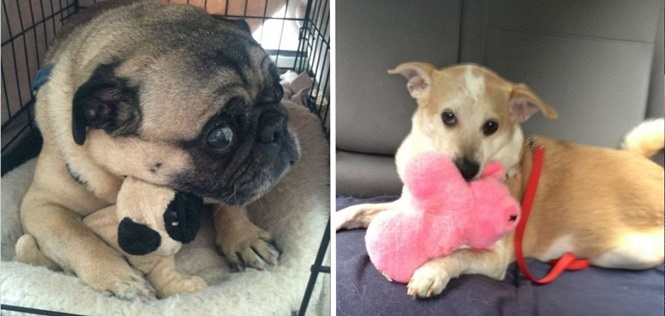 Cachorros e gatos que não se desgrudam de seus brinquedos por nada nesse mundo