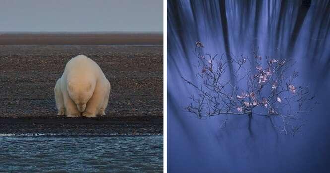 As fotos vencedoras do concurso National Geographic Nature Photographer de 2016