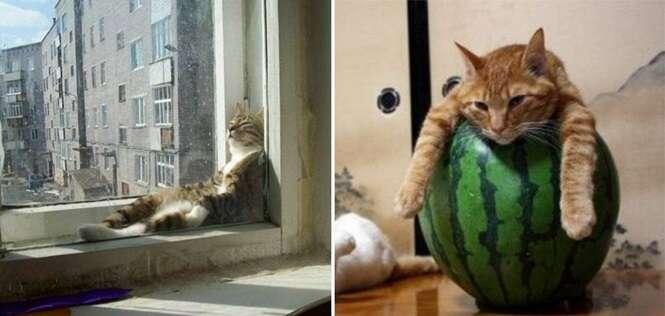 Gatos tão preguiçosos que vão te causar inveja