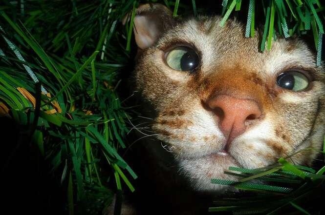 Gatos que só querem ajudá-lo a decorar sua árvore de Natal