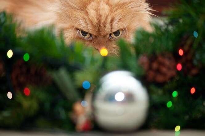 Imagens de animais que odeiam o Natal e que não escondem isso de ninguém