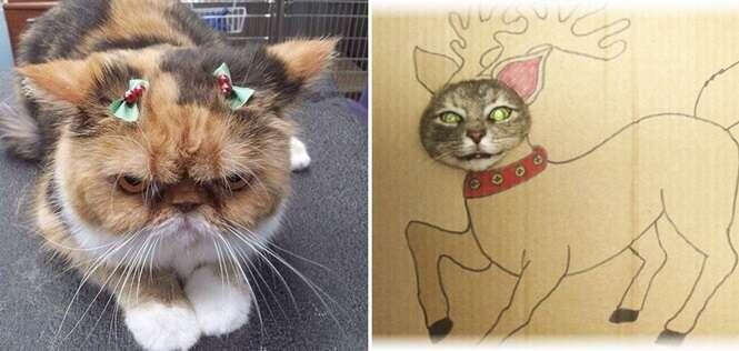 Gatos que não estão dando a mínima para o espírito do Natal