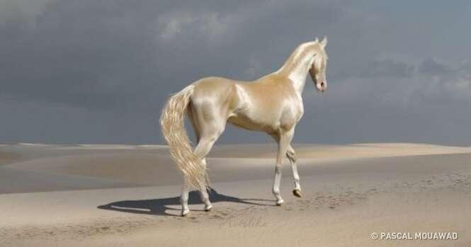 Cavalos impressionantemente belos
