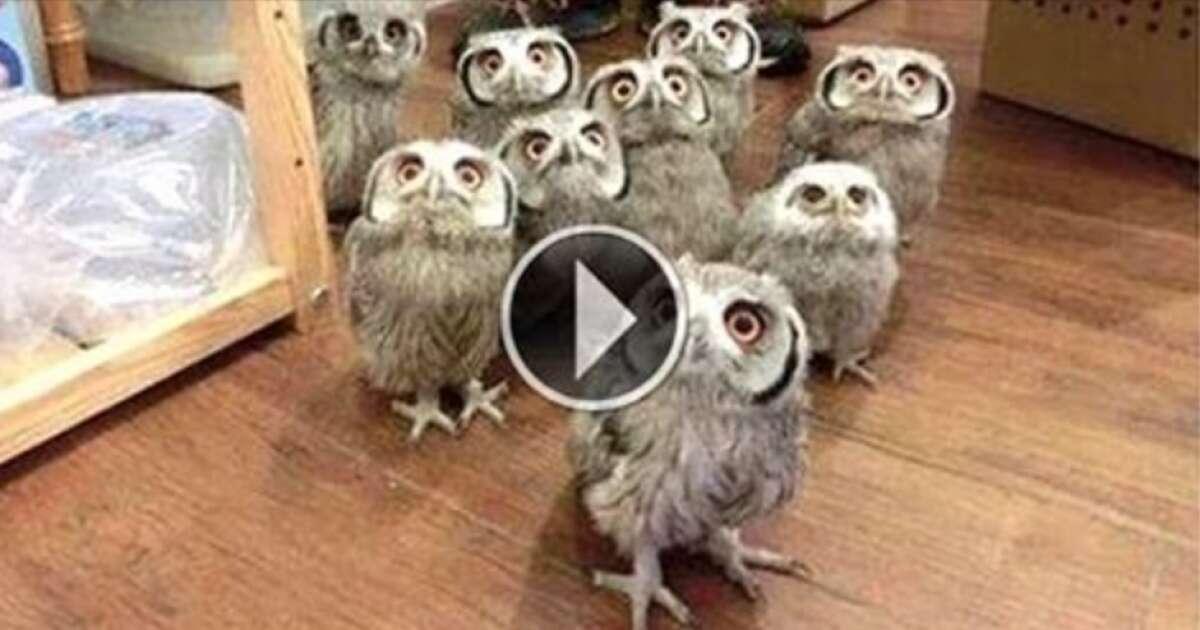Vídeo mostra as corujas de um jeito que você nunca viu