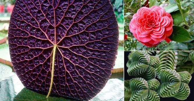 Plantas geometricamente surpreendentes