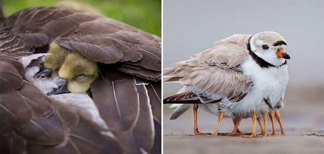 Imagens lindas de mães aves cuidando de seus filhotes