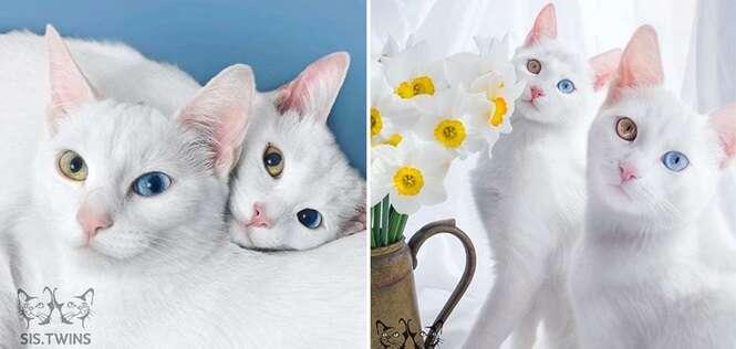Esses gatos são considerados os mais belos do mundo