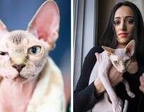Mulher fica chocada ao perceber que comprou gato com pelos raspados pensando se tratar de felino da raça Sphynx