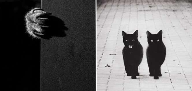 Belas imagens mostrando a misteriosa vida dos gatos