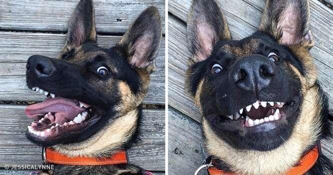 Fotos boas pra cachorro