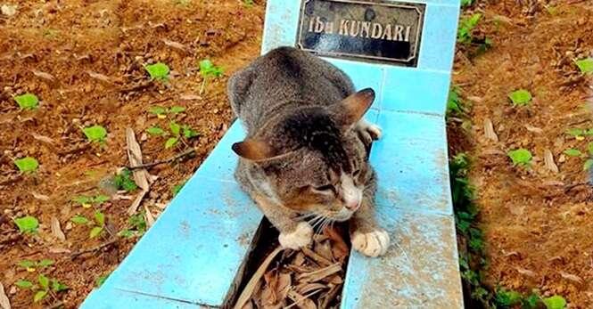 Este gatinho está vivendo em cima da sepultura de sua dona há um ano