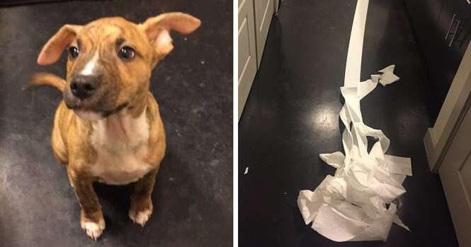 As pessoas estão apaixonadas por este cachorrinho, que tentou limpar o xixi que fez no chão do banheiro