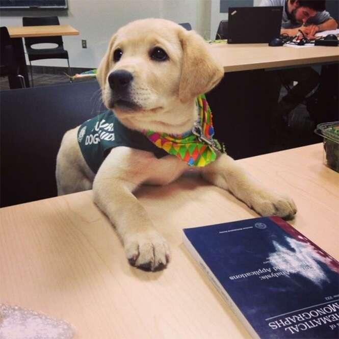 Cachorros que têm certeza de que são humanos