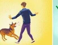 O que fazer se você for atacado por um cão