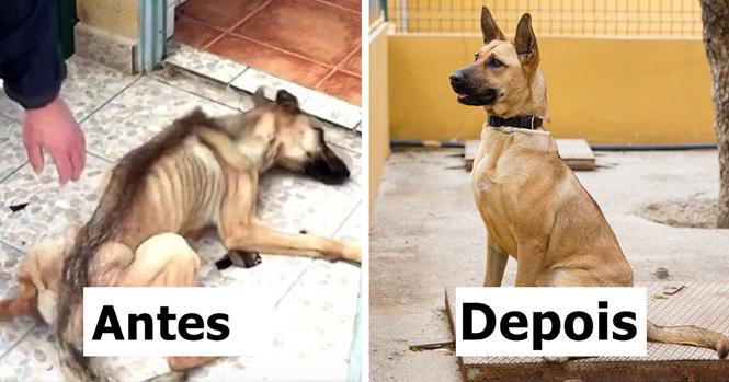 Cães antes e depois de serem resgatados, para você ver do que o amor é capaz