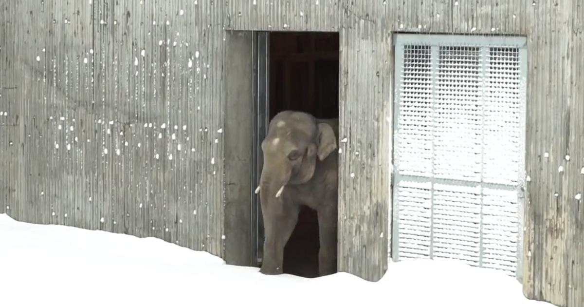 Neve fecha zoológico nos EUA, e isto é o que os animais fazem