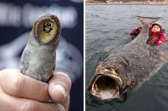 """Fotos que te farão dizer: """"natureza, você é assustadora"""""""