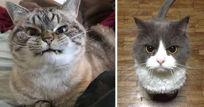 Os gatos mais irritados que você já viu na vida
