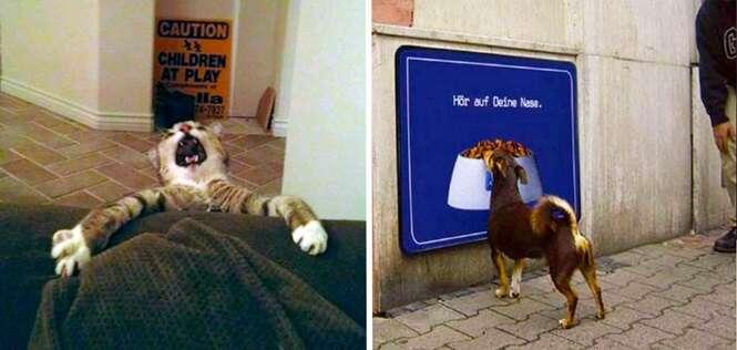 Animais que com certeza precisarão de uma ajudinha