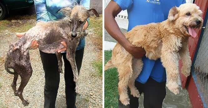 Imagens inacreditáveis de cães antes e depois de serem resgatados