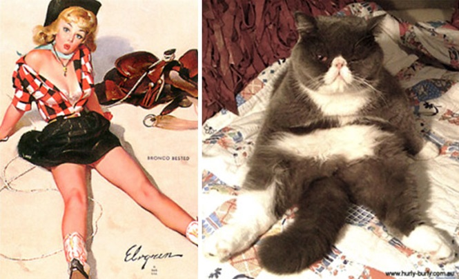 Gatos imitando modelos pin-up