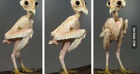 Você vai ficar chocado depois que descobrir que ave sem penas é esta