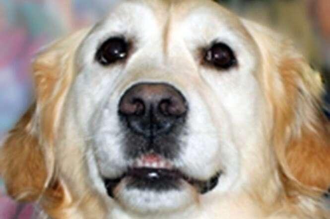 Cadela salva seu dono, que quebrou o pescoço, de congelar até a morte na neve