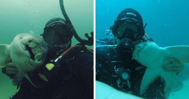 Há 7 anos, sempre que homem mergulha, tubarão vai a seu encontro esperando ganhar abraço