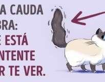 Como entender seu gato