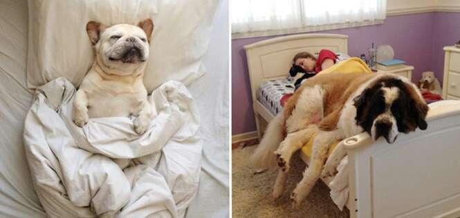 Cães espertinhos que pegaram o lugar de seus proprietários na hora de dormir