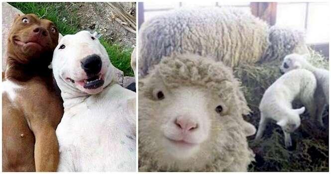 Animais que fazem selfie bem melhor que você