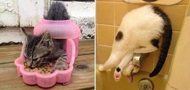Imagens provando que a lógica dos gatos não faz sentido