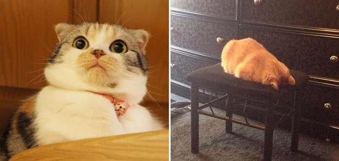 Gatos que são como você no trabalho