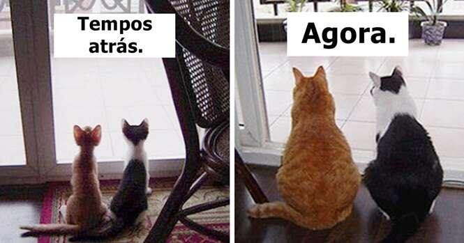 Antes e depois mostrando animais que cresceram juntos