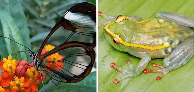 Animais transparentes que mais parecem ter saído de filmes fantasiosos