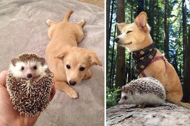 Fotos adoráveis de animais que cresceram juntos