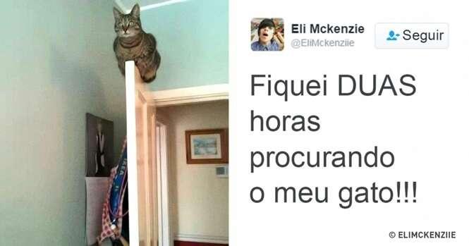 Gatos que ganharam a internet