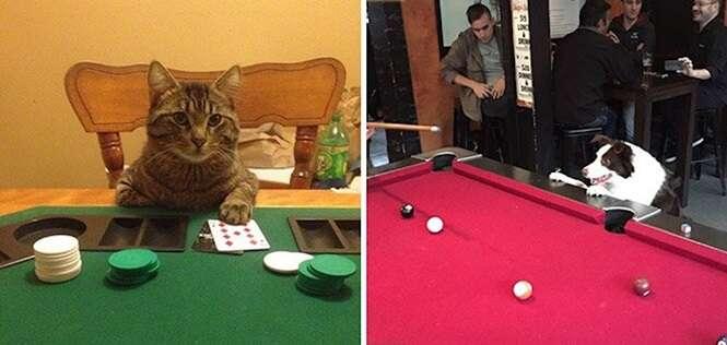 Animais que só têm um simples desejo: participar da brincadeira