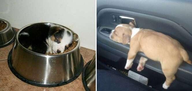 Filhotes com a incrível capacidade de dormir em qualquer lugar