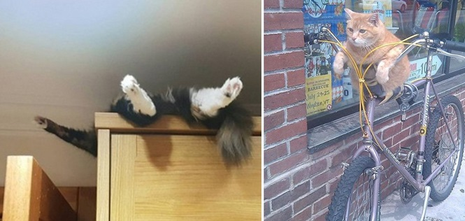 Lugares onde você com certeza não procuraria por seu gato