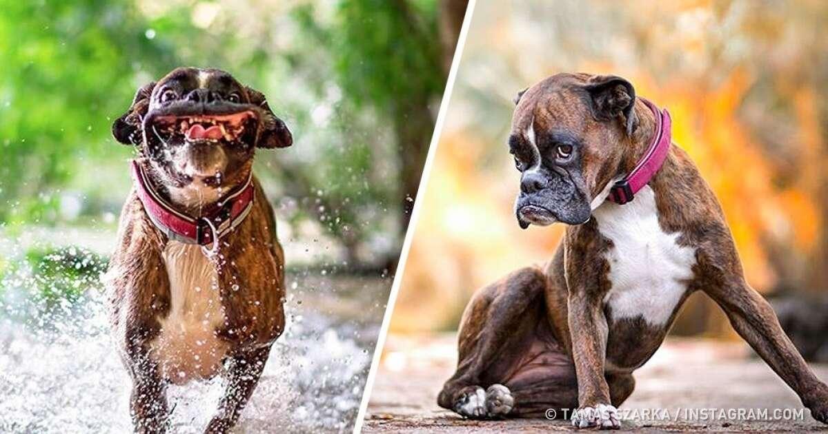 Conheça a cadelinha que se expressa bem melhor que muita atriz por aí