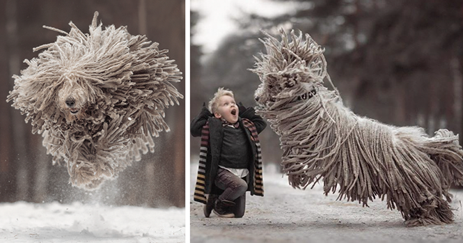 As imagens destas crianças brincando com seus cãezinhos farão seu dia melhor