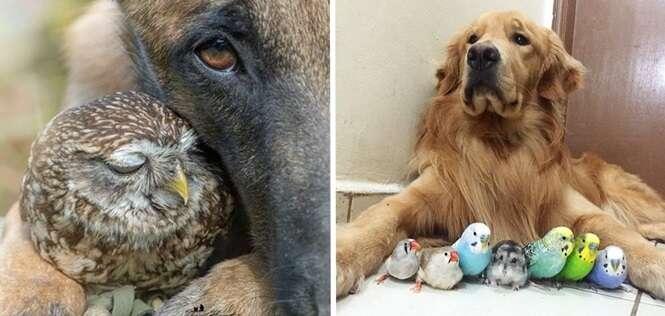 Os mais fofos exemplos de amizade entre animais de diferentes espécies