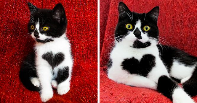 Conheça Zoë, a gatinha que tem, literalmente, um coração no peito