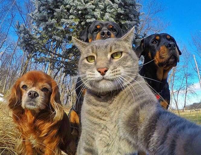 Selfies de animais que arrancarão ao menos um sorriso seu