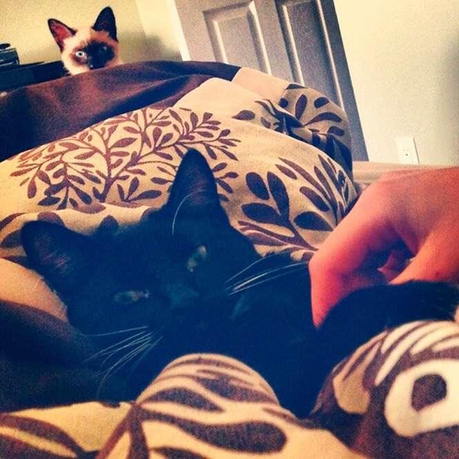 Animais ciumentos capazes de qualquer coisa para ganharem um pouco de atenção