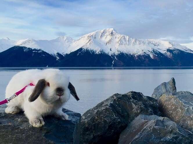 Este animal não é apenas um coelho, ele é também o companheiro de caminhada de sua dona